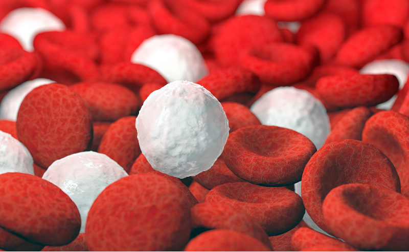 red and white blood cells leukemia